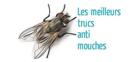 Trucs anti mouches astuces de grand m re for Anti mouches maison