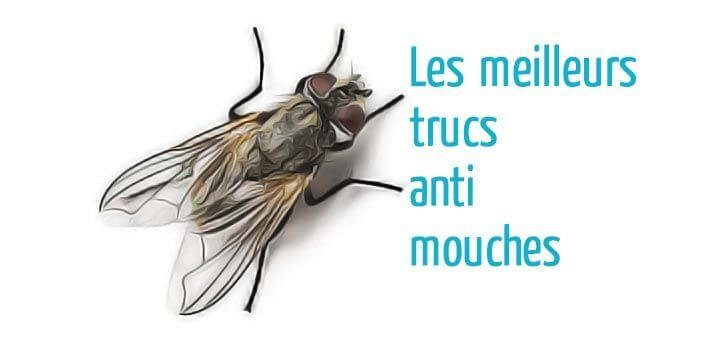 Trucs anti mouches astuces de grand m re for Attrape mouche maison
