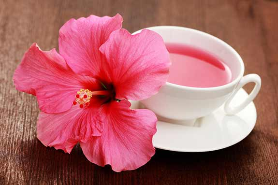 hibiscus comestible