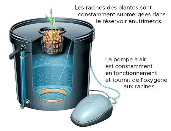 technique de l'hydroponique