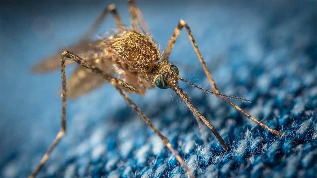 tuer le moustique qui rode dans votre chambre la nuit